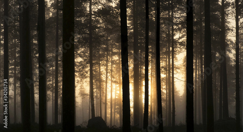 Sunset in foggy forest