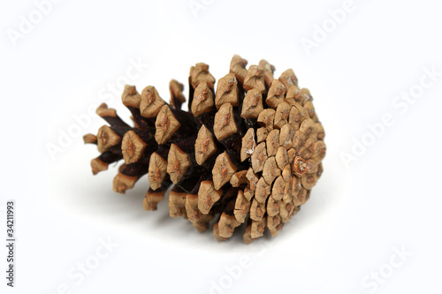 Pine cone - isolated
