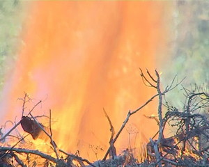 The fire in the forest. Flames destroy everything alive.