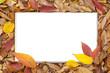 落葉背景のスケッチブック