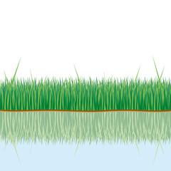 gras mit spiegelung