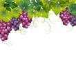 grape background
