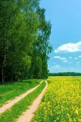 Beautiful summer landscape. Road in field and wood