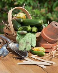 Courgette Basket With Garden Tools