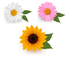 Big set of a beautiful colorful flowers. Vector illustration.