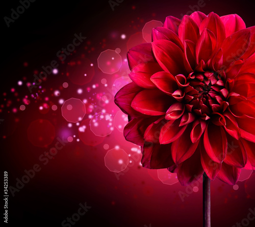 Dahlia Autumn flower design