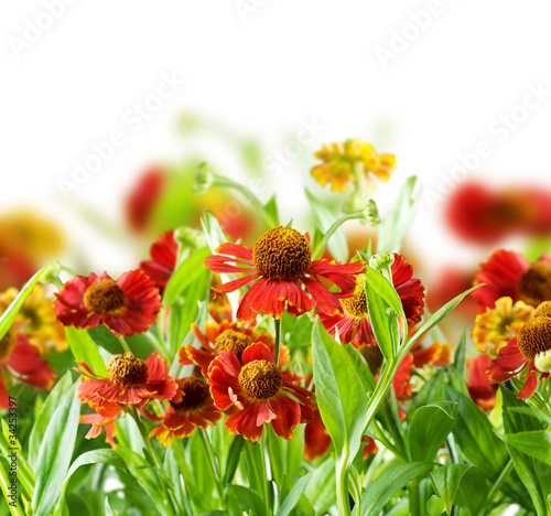Summer Flowers Abstract Background