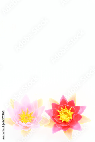 water lily flowers border