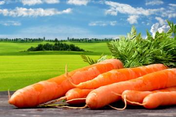 Karotten Ernte