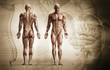 Leinwanddruck Bild - human body