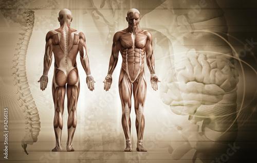 human body - 34266135