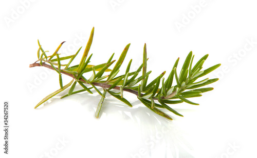 twig of rosemary over white background