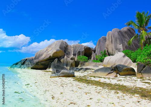 Beach Wallpaper Coconut