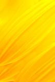 Fototapety Sunflower petals