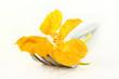 essbare Blüte