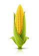 corncob vector illustration