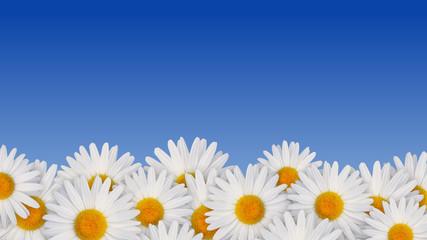 Blumen & blauer Himmel
