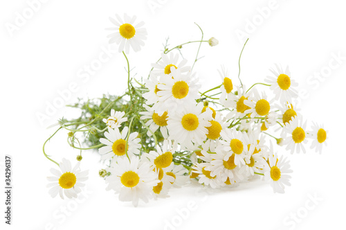Papiers peints Marguerites Medical chamomile