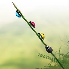 Coccinelles des couleurs cmjn dans l'herbe