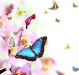 Fototapeta piękny - uroda - Insekt