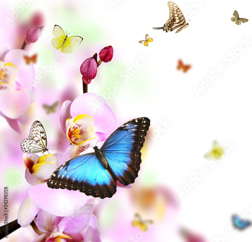 motyle-na-okwitnieciach-orchidea-odizolowywajaca-na-bialym-tle