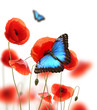 Exotic butterfly on poppy blossom, isolated on white background