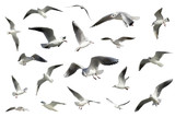 set of white flying birds isolated. gulls - Fine Art prints