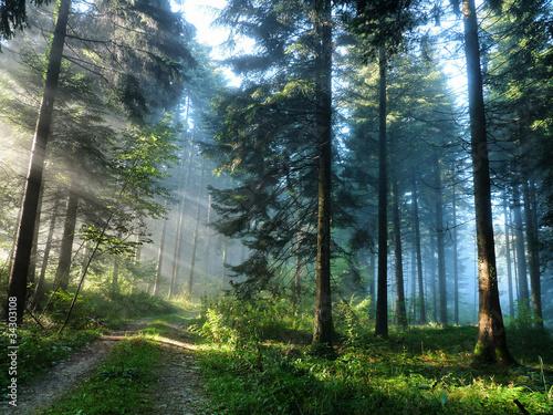 Fototapeten,landschaft,holz,sommer,trampelpfad
