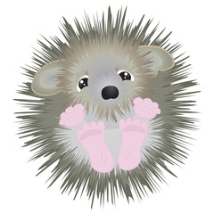 Cute little hedgehog - vector illustration