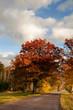 Rual road in autumn