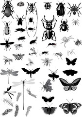set of isolated gray insects