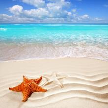 caribbean tropical Plage de sable blanc coquille étoile de mer