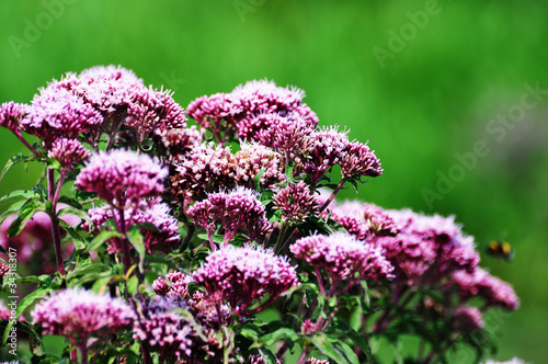 wild purple flowers