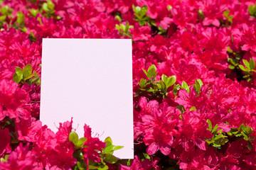 letter[azalea]_07