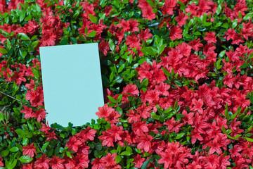 letter[azalea]_28