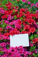 letter[azalea]_49