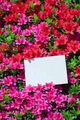 letter[azalea]_48