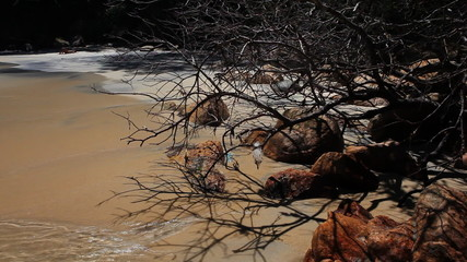 Beach with turquiose water and stones