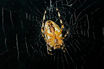 High contrast image of very dreadful spider in night darkness.