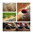 Vin, bouteille, raisin, vigne, œnologie, boisson, chai, cave