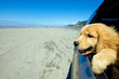 Puppy Dog out the window driving in a car on the beach - 34337913