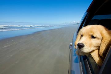 Dog on a drive