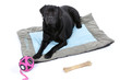 labrador noir allongé sur son tapis avec ses jouets