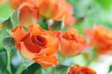Fototapeta uroda - początek - Kwiat