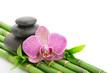 Fototapeten,spa,massage,bambus,orchid