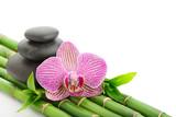 Fototapeta bambus - storczyk - Kwiat