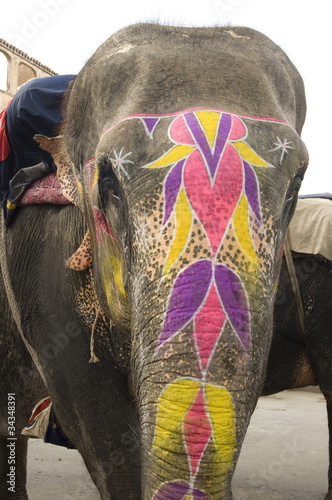 colorful painted elephant, Jaipur, Rajasthan,India,Asia