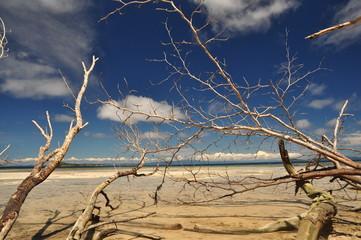 waigeo beach #1