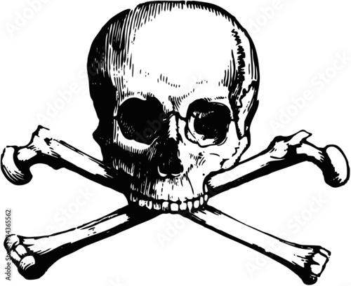 Vector skull and crossbones