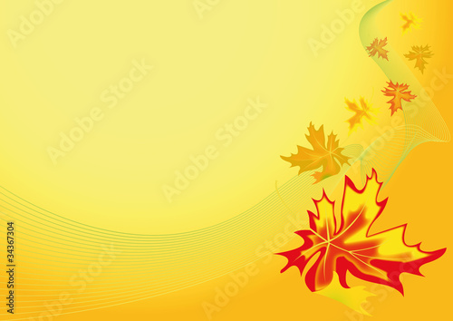 autumn maple leaf 3
